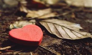 Καρδιές ζωντανές...ερωτευμένες!