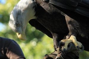 Ο πληγωμένος αετός...